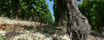 De ondergrond van de wijngaard van Vignoble Des Agaises